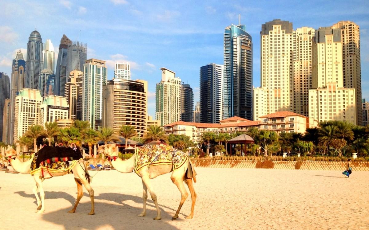 Zdjęcia: Dubaj Marina, Dubaj, Wielbłady na tle kompleksu Dubaj Marina, POLSKA