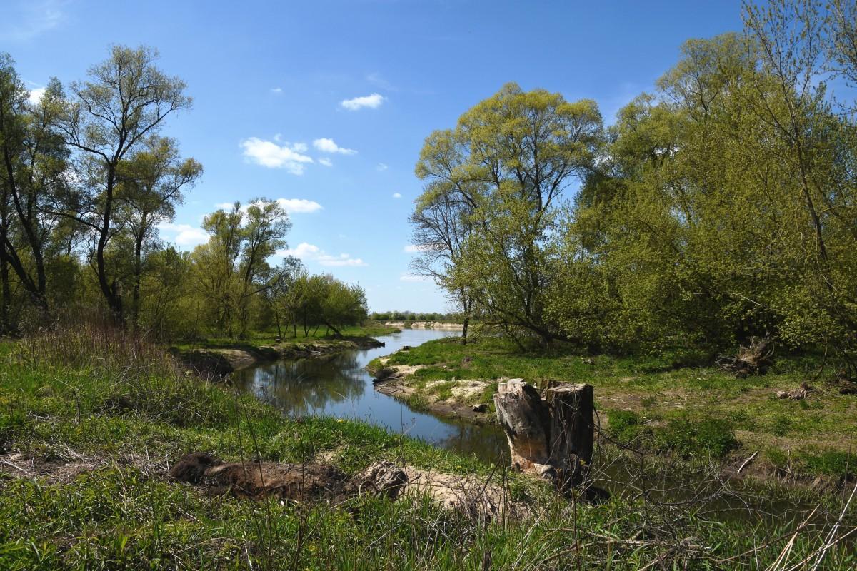 Zdjęcia: okolice Wilgi - Ruda Tarnowska, Mazowsze, Nad Wisłą - odnoga rzeki, POLSKA