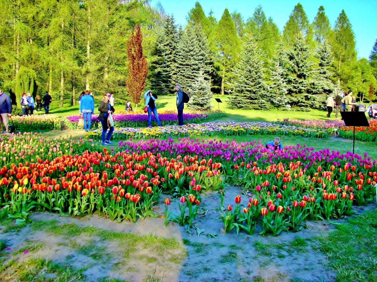 Zdjęcia: Łódź,Ogród Botaniczny, województwo łódzkie, Na Dzień Kobiet dużo kwiatków, POLSKA