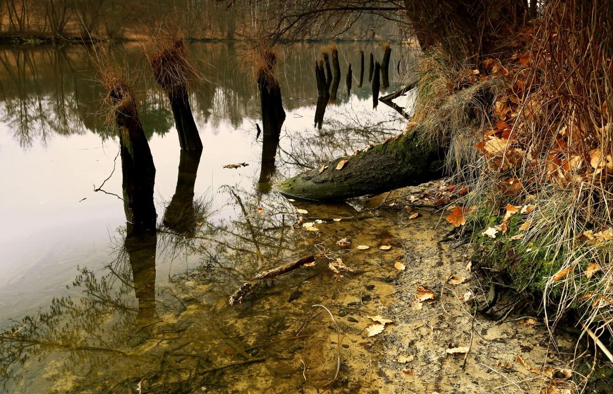 Zdjęcia: Dolina Brdy, Bory Tucholskie, Uroki polskich rzek-Dolina Brdy, POLSKA