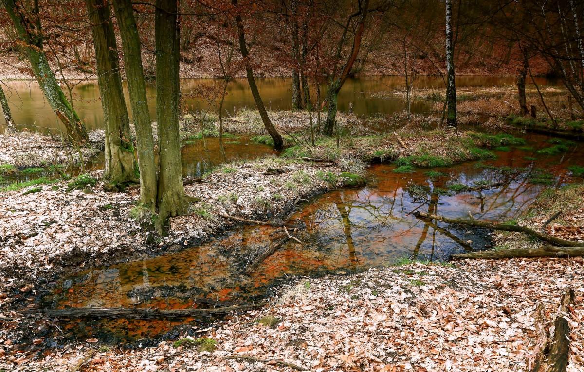 Zdjęcia: Dolina Brdy, Bory Tucholskie, W Dolinie Brdy, POLSKA