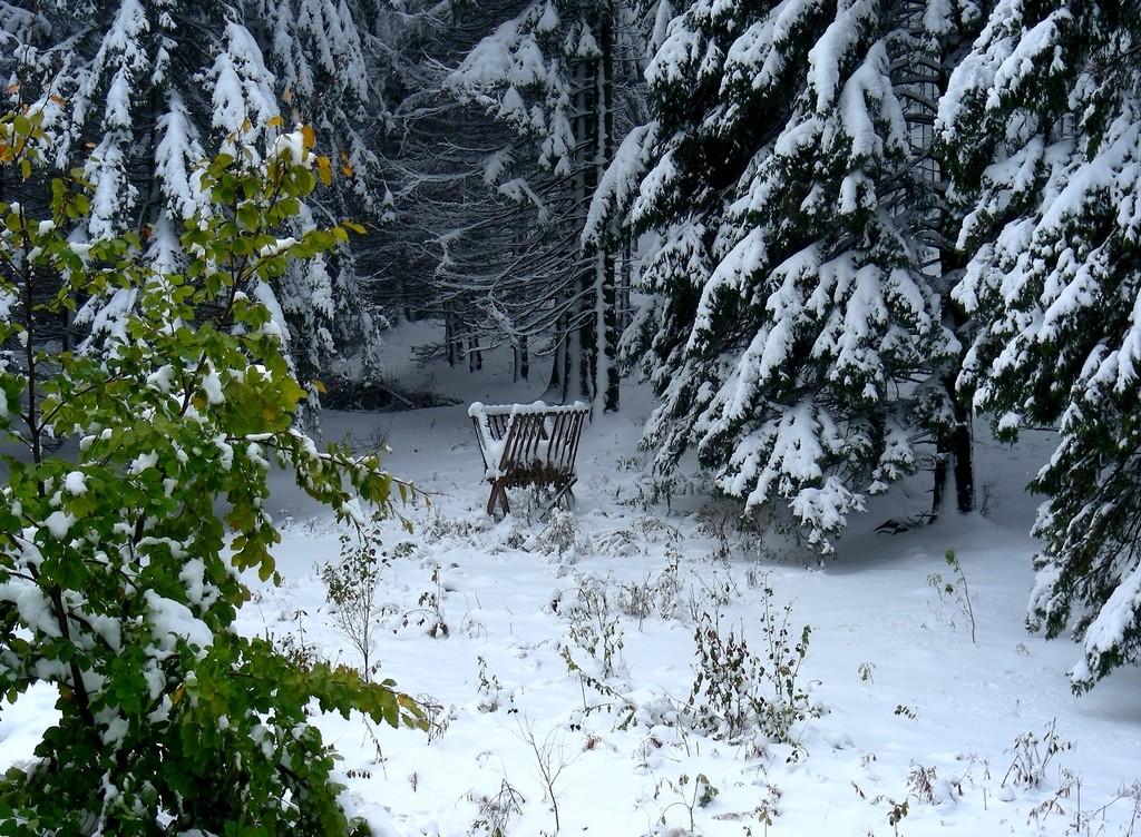 Zdjęcia: Karpacz, dolnoślaskie, Paśnik w lesie., POLSKA