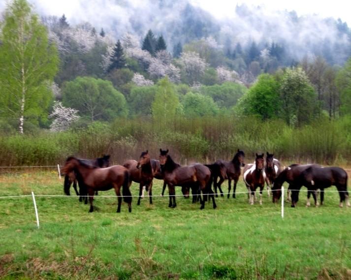 Zdjęcia: gdzieś w Bieszczadach, Bieszczady, Konie, POLSKA