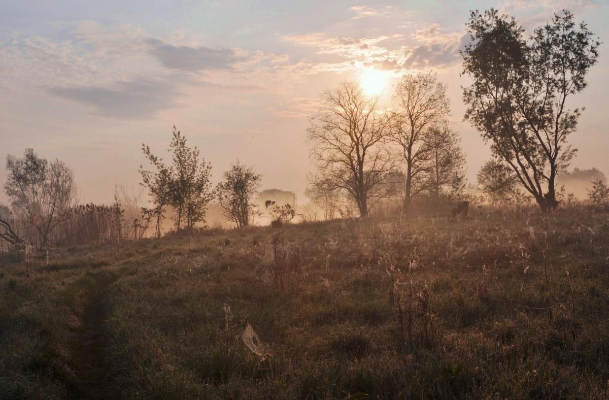 Zdjęcia: okolice Jeziorzan, Mazowsze, Wczesnym rankiem, POLSKA