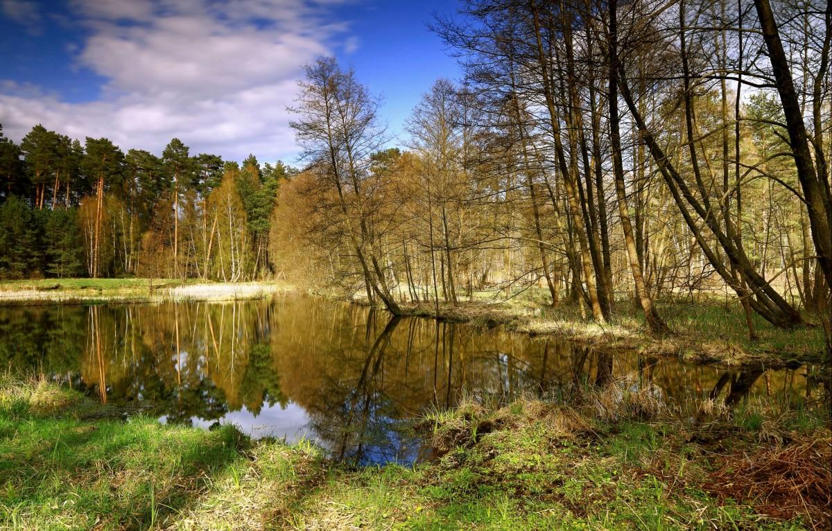 Zdjęcia: Zamrzenica, Bory Tycholskie, Szlakiem Doliny  Brdy, POLSKA