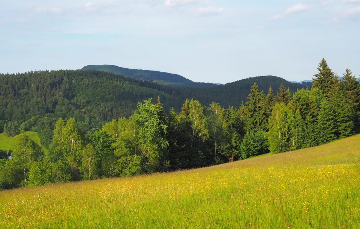 Zdjęcia: Rudawski Park Krajobrazowy, Dolny Śląsk, słychać, jak kwiatki rosną..., POLSKA