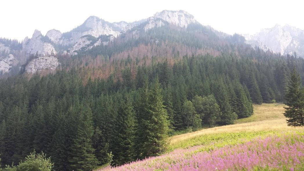 Zdjęcia: Dolina Kościelska, Tatry, Widok z Doliny Kościeliskiej, POLSKA