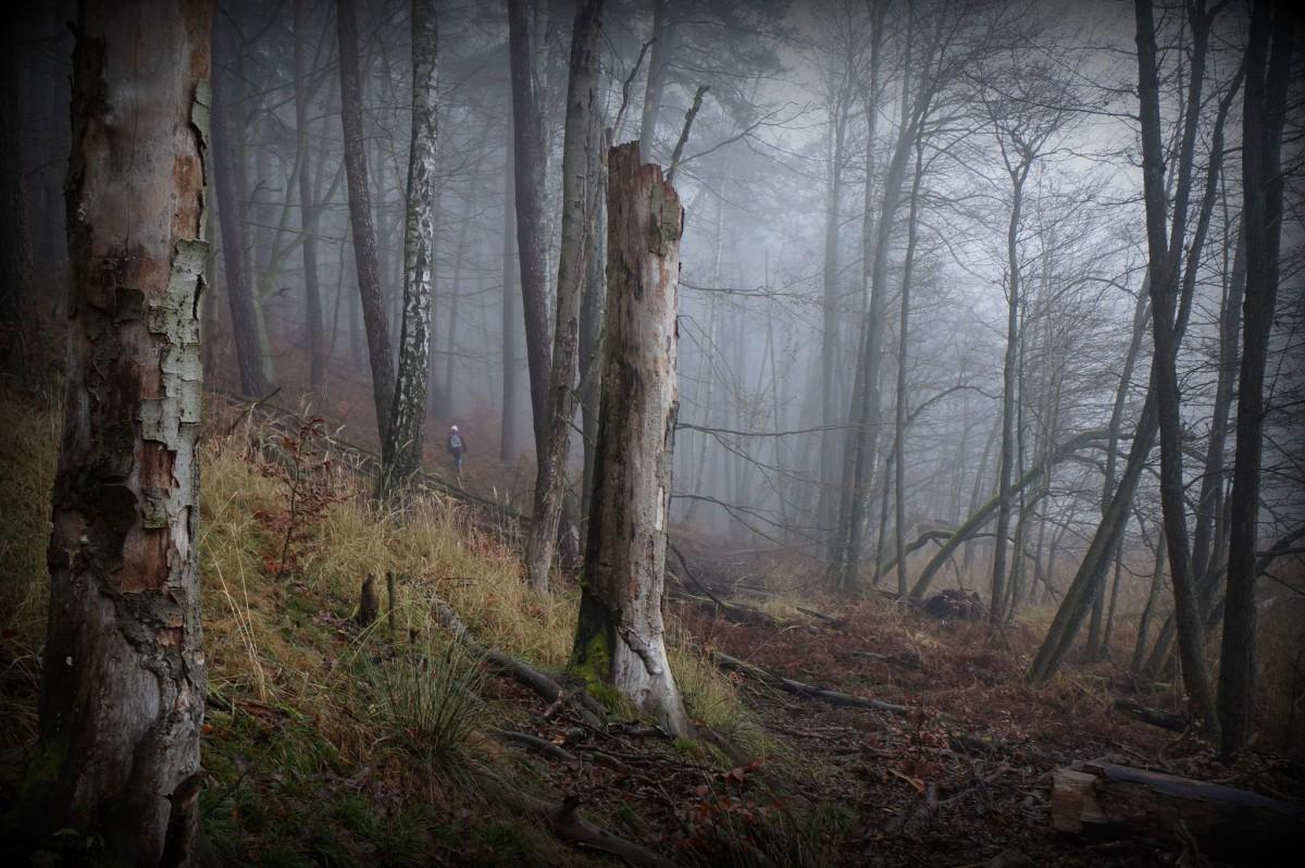 Zdjęcia: Drawienski Park Narodowy, Polska pn-zach, Do chaty Baby Jagi, POLSKA