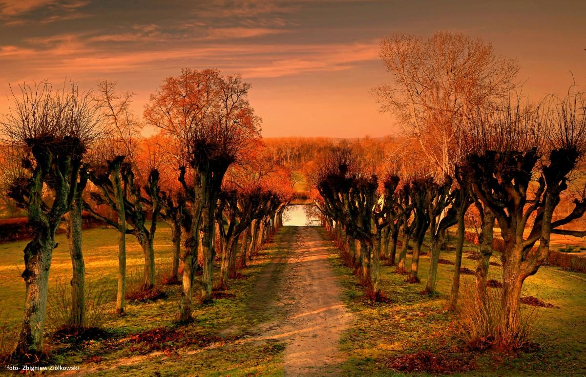 Zdjęcia: Ostromecko, Dolina Wisły, Jesienny poranek, POLSKA