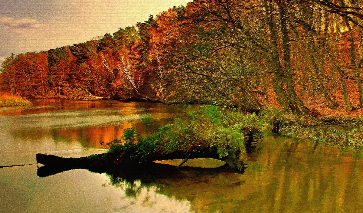 Zdjęcia: Dolina Brdy, Bory Tucholskie, Jesienne impresje -6, POLSKA