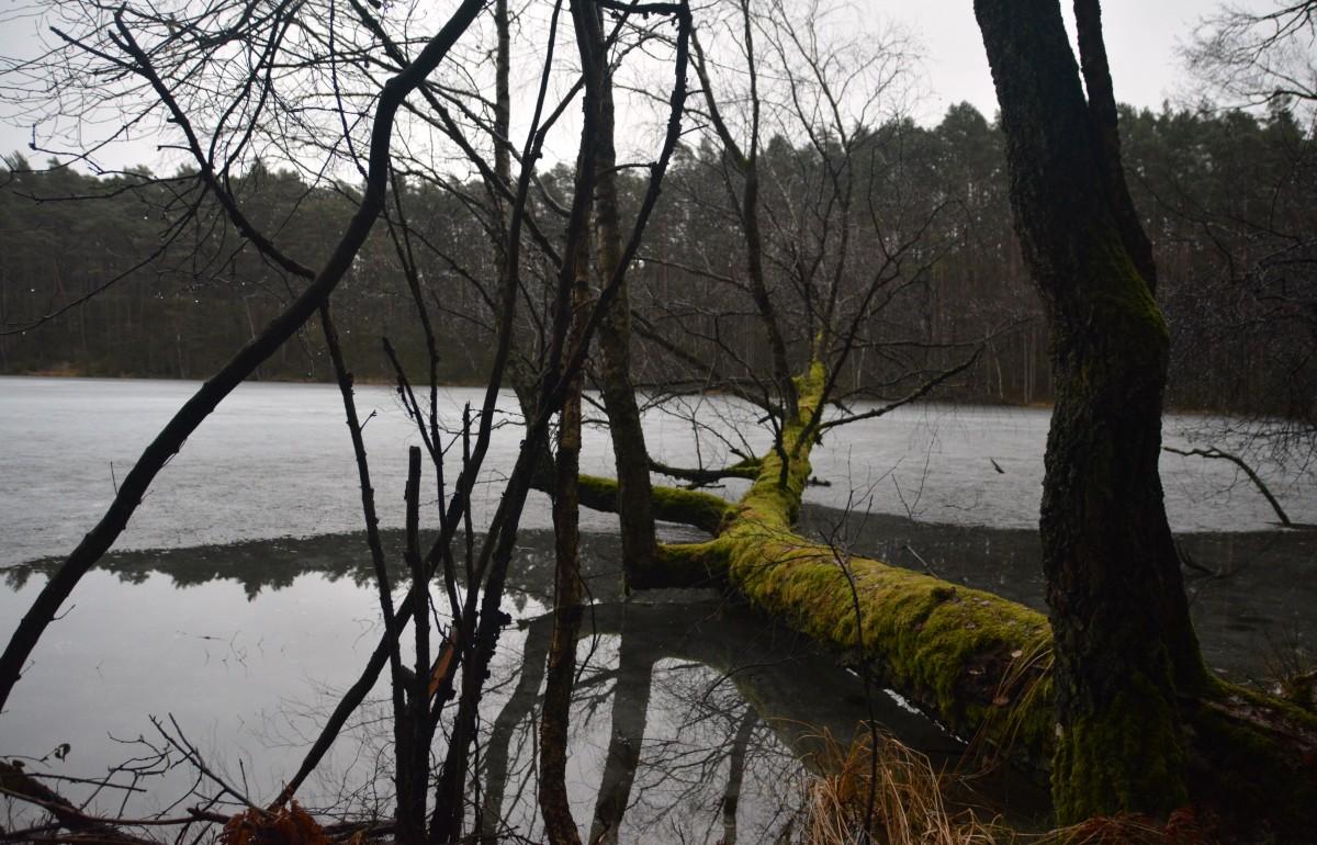 Zdjęcia: O.O.Ś.Olbracht, Park Narodowy Borów Tucholskich, Brzoza, mchy i woda, POLSKA