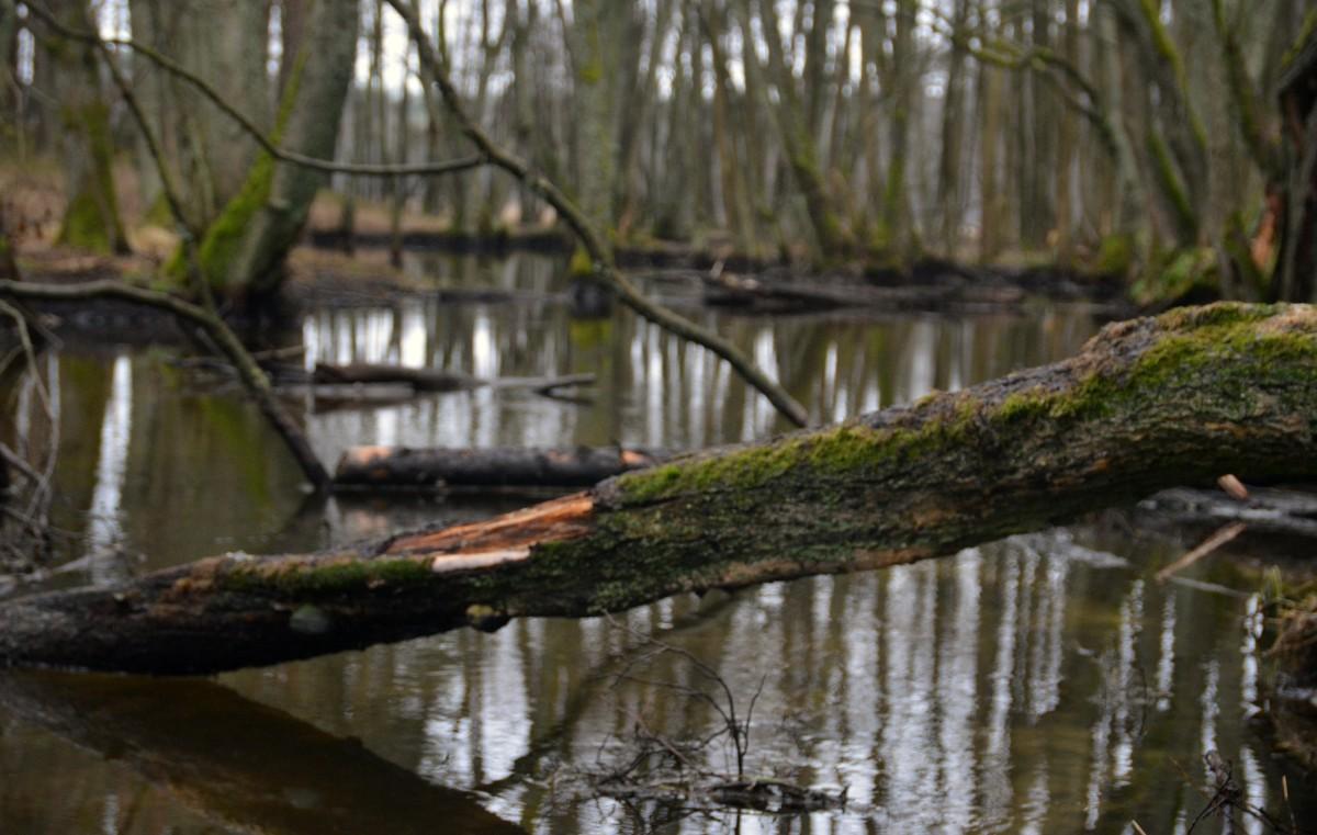 Zdjęcia: Okolice Jeziora Płęsno, Park Narodowy Borów Tucholskich, Struga, POLSKA