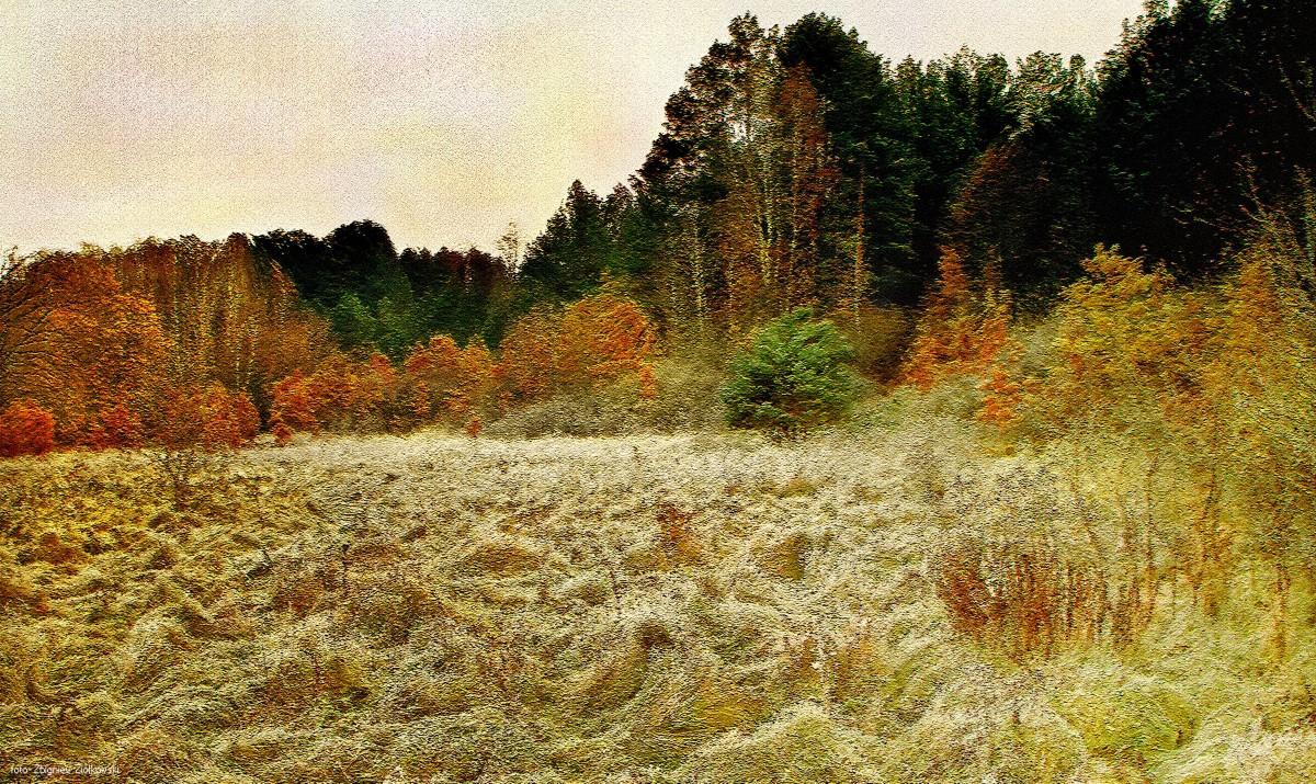 Zdjęcia: BoryTucholskie, Bory Tucholskie, Jesienny pejzaż, POLSKA