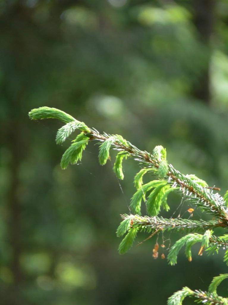 Zdjęcia: Gołdap, Puszcza Romincka, las, POLSKA