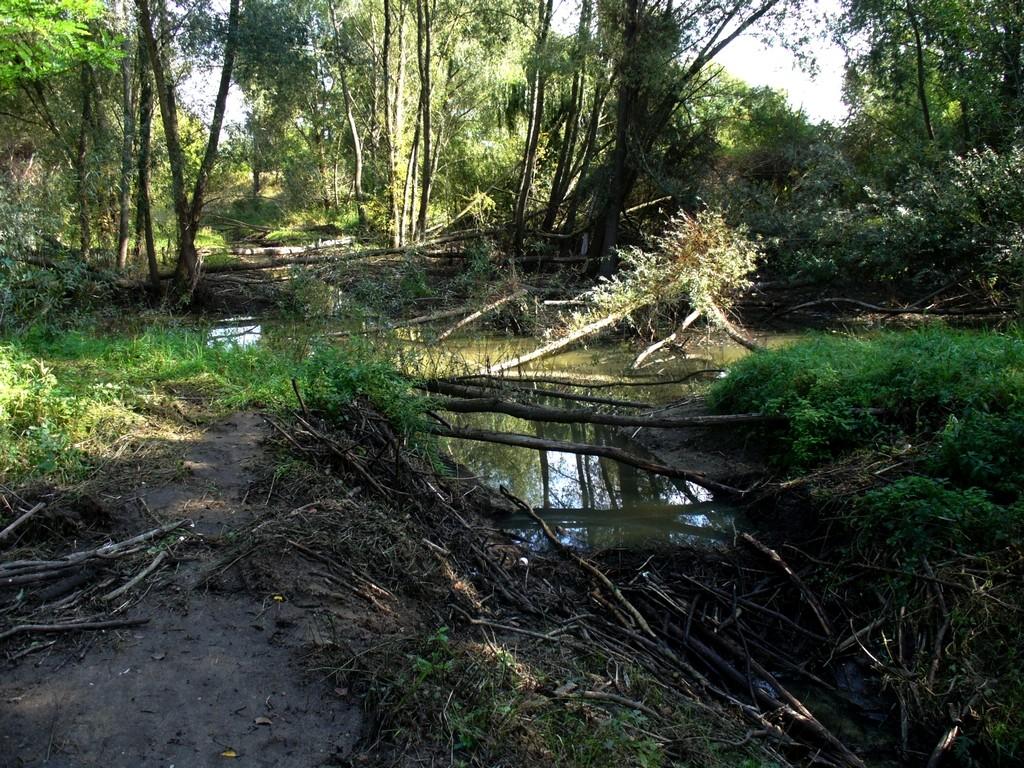 Zdjęcia: Nad Odrą, opolskie, Zniszczona tama bobrza, POLSKA