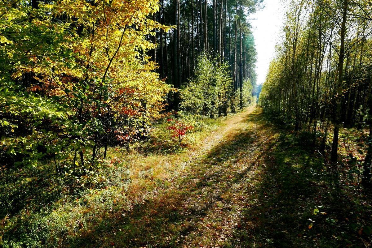 Zdjęcia: Karolew, Łódzkie, Jesień idzie ku mnie przez... las, POLSKA