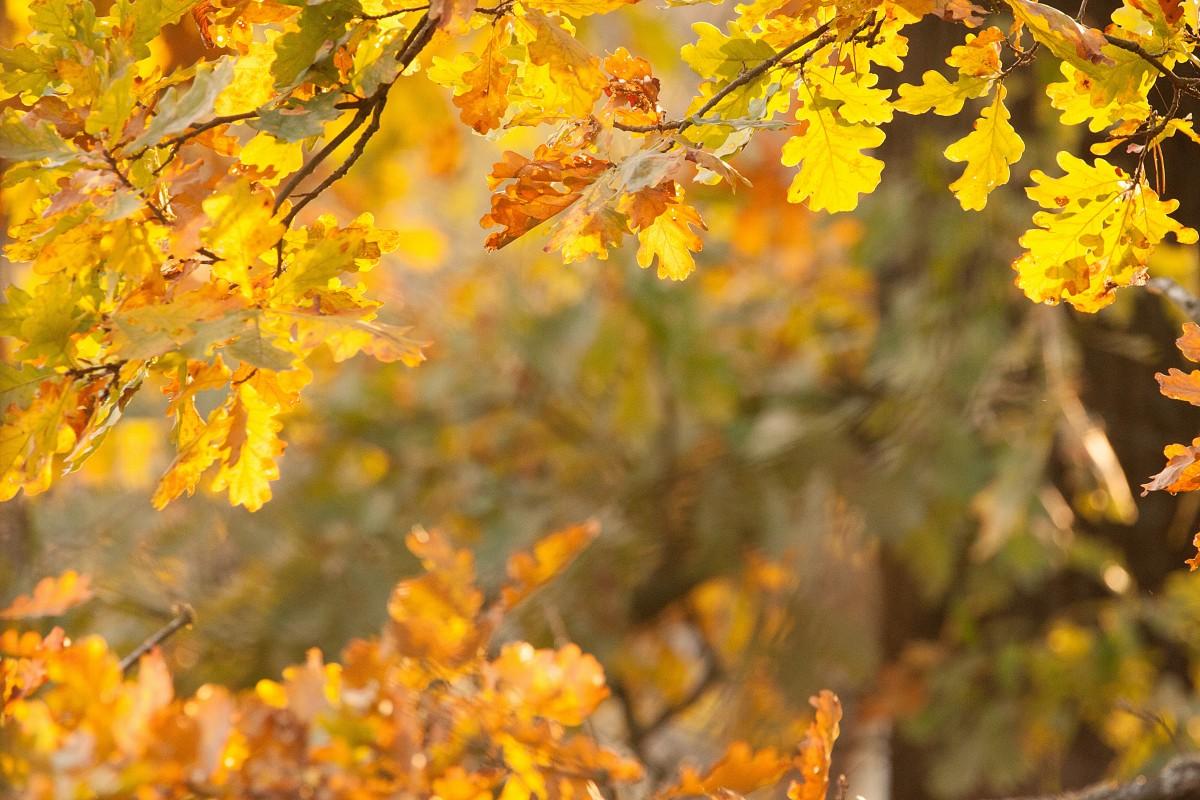 Zdjęcia: Kampinos, mazowieckie, Już jesień..., POLSKA