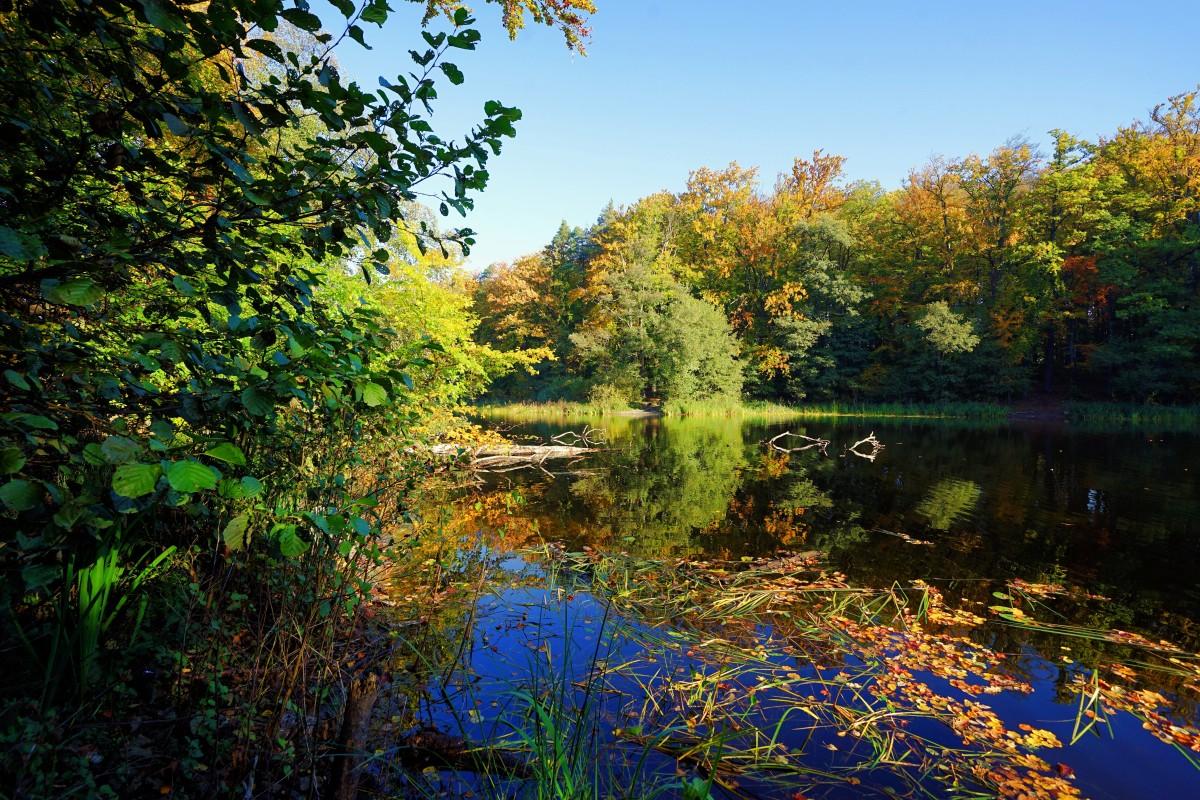 Zdjęcia: Otomiński Obszar Chronionego Krajobrazu, Kolbudy, Uroczysko, POLSKA