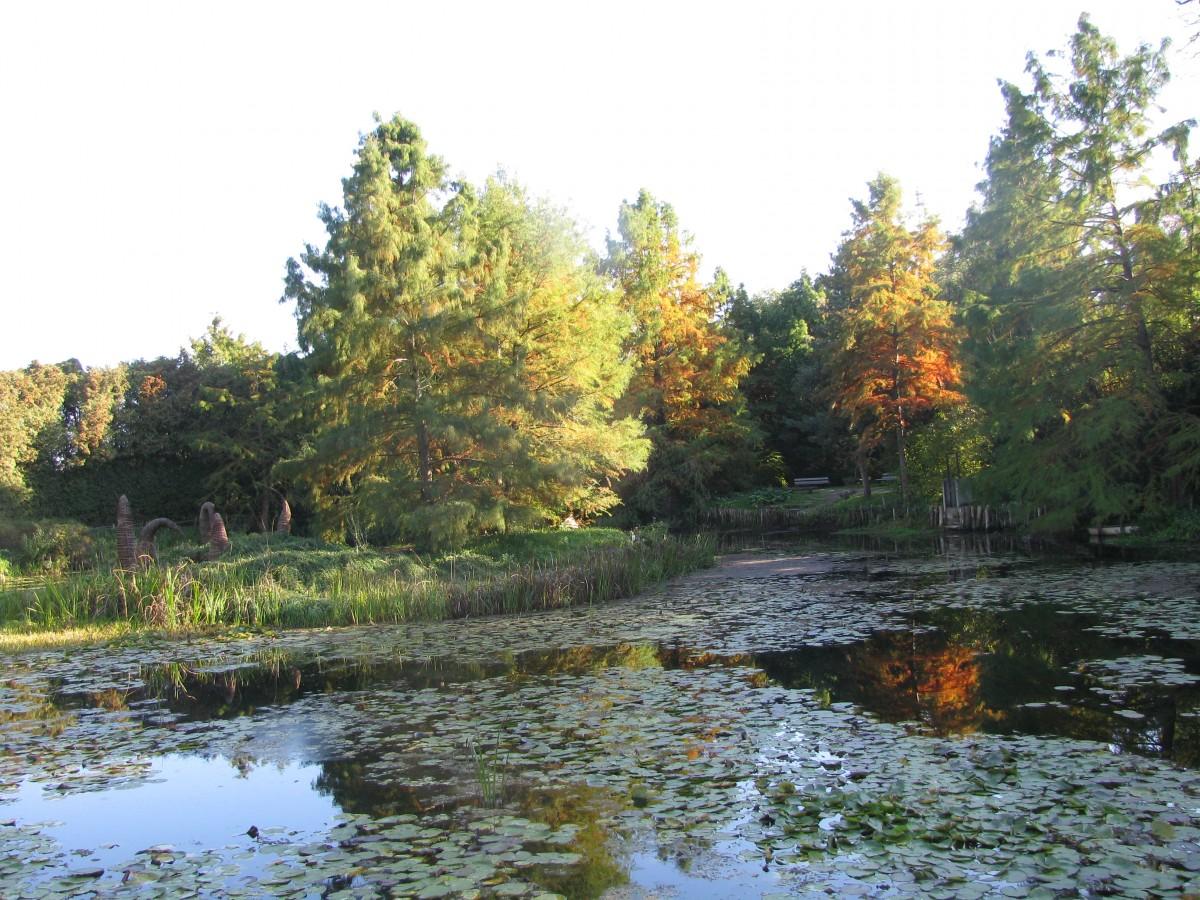 Zdjęcia: Bolestraszyce, Podkarpacie, Jesień w Arboretum, POLSKA