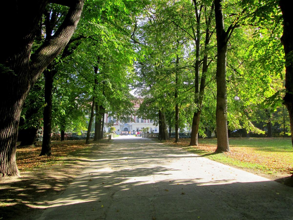 Zdjęcia: Łańcut, Podkarpacie, Aleja, POLSKA