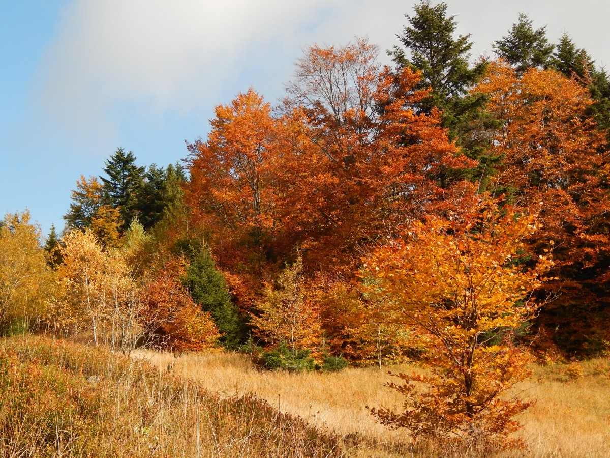 Zdjęcia: Beskid Żywiecki, Beskidy, Beskidzka jesień, POLSKA