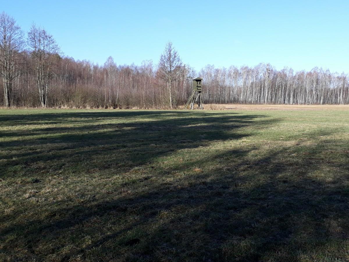 Zdjęcia: Chojnowo , Podlasie, Wczesnym rankiem , POLSKA