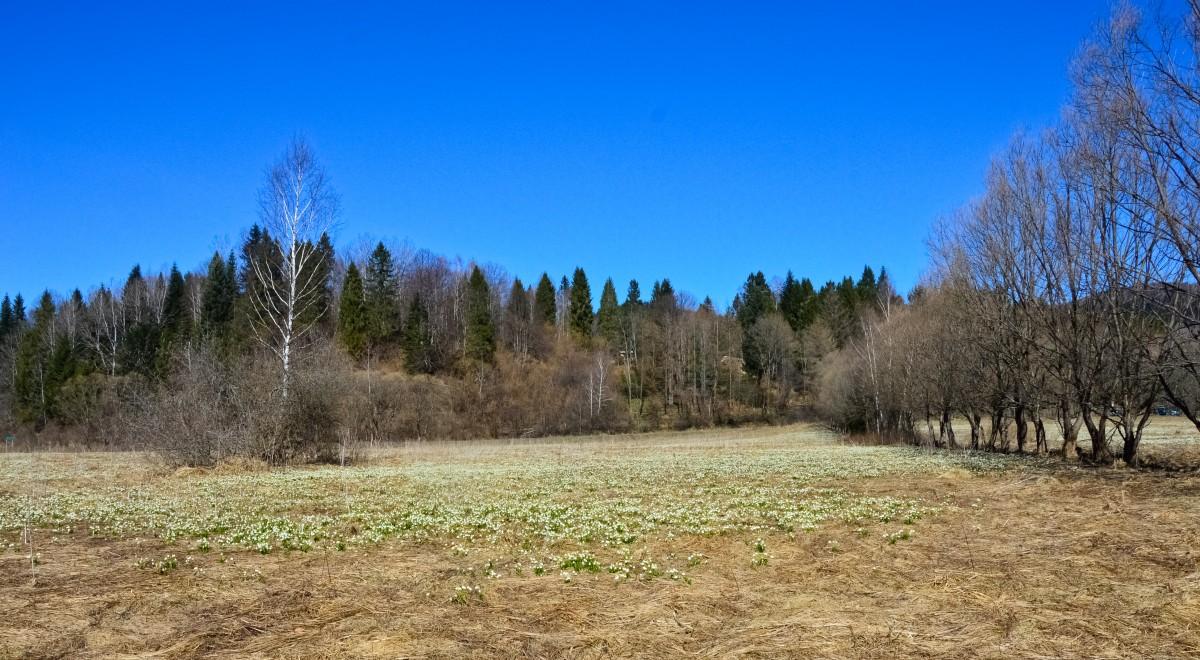 Zdjęcia: Dwerniczek, Podkarpacie, W Białym Królestwie, POLSKA