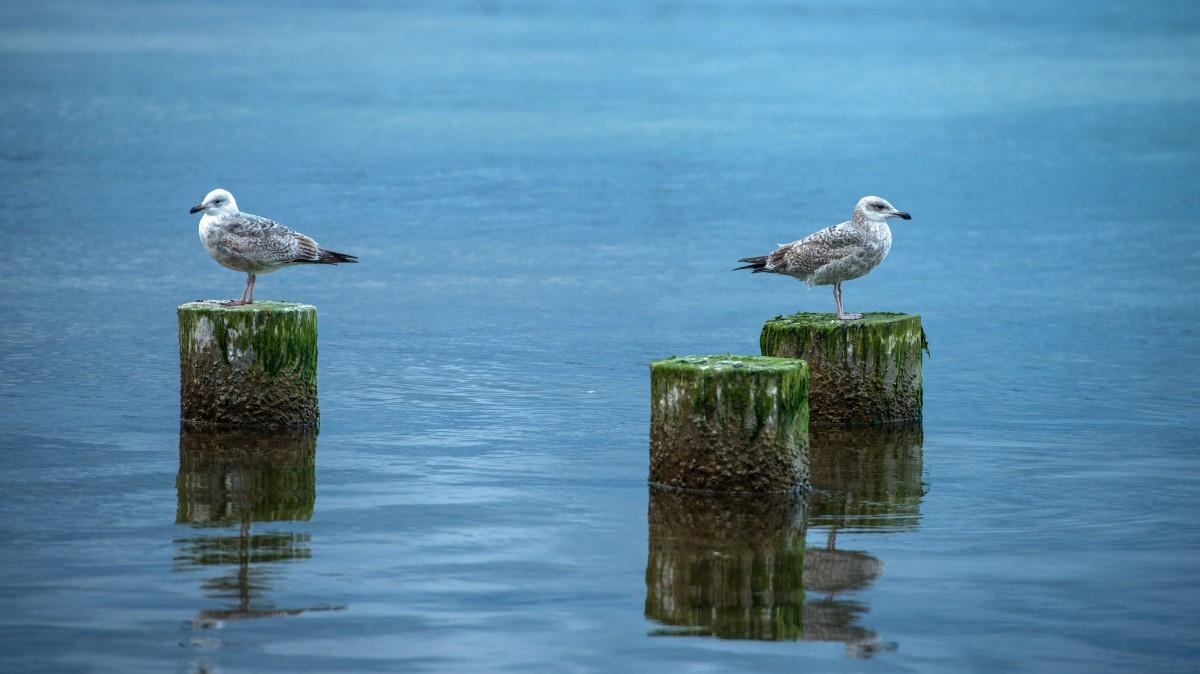 Zdjęcia: Gdynia Torpedownia, Pomorze, Rozmowy rodzinne ;-), POLSKA