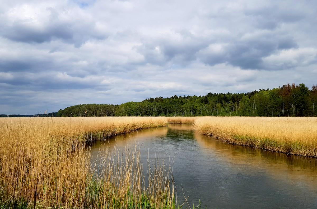 Zdjęcia: okolice Drawna, Równina Drawska, w szuwarach..., POLSKA