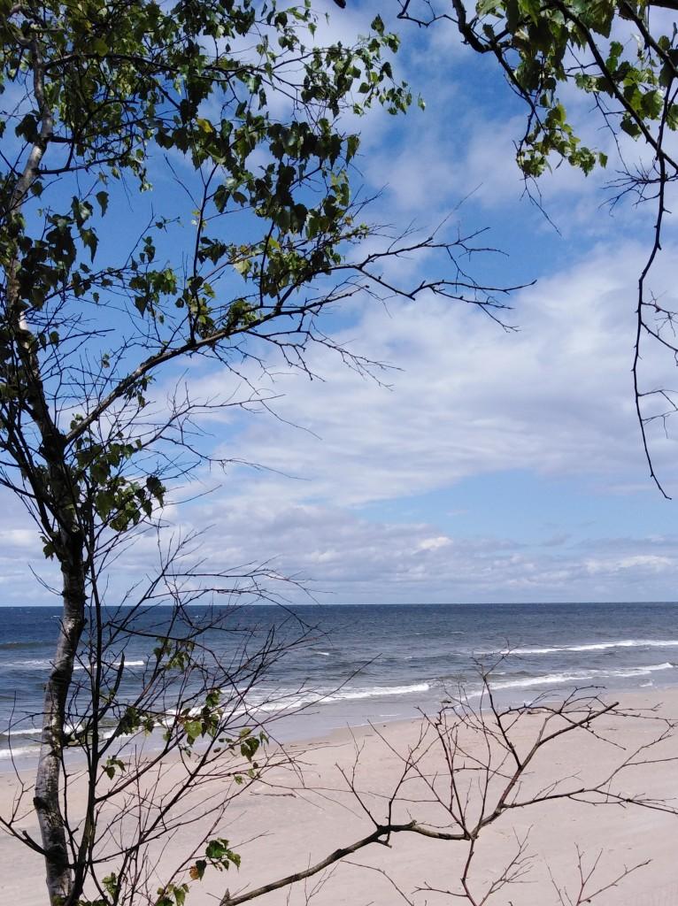 Zdjęcia: Stegna, Żuławy Wiślane, Morze w brzozowej ramce, POLSKA