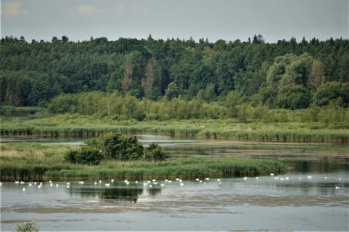Zdjęcia: Prabuty, Pojezierze Iławskie, Rezerwat przyrody - Jezioro Liwieniec, POLSKA