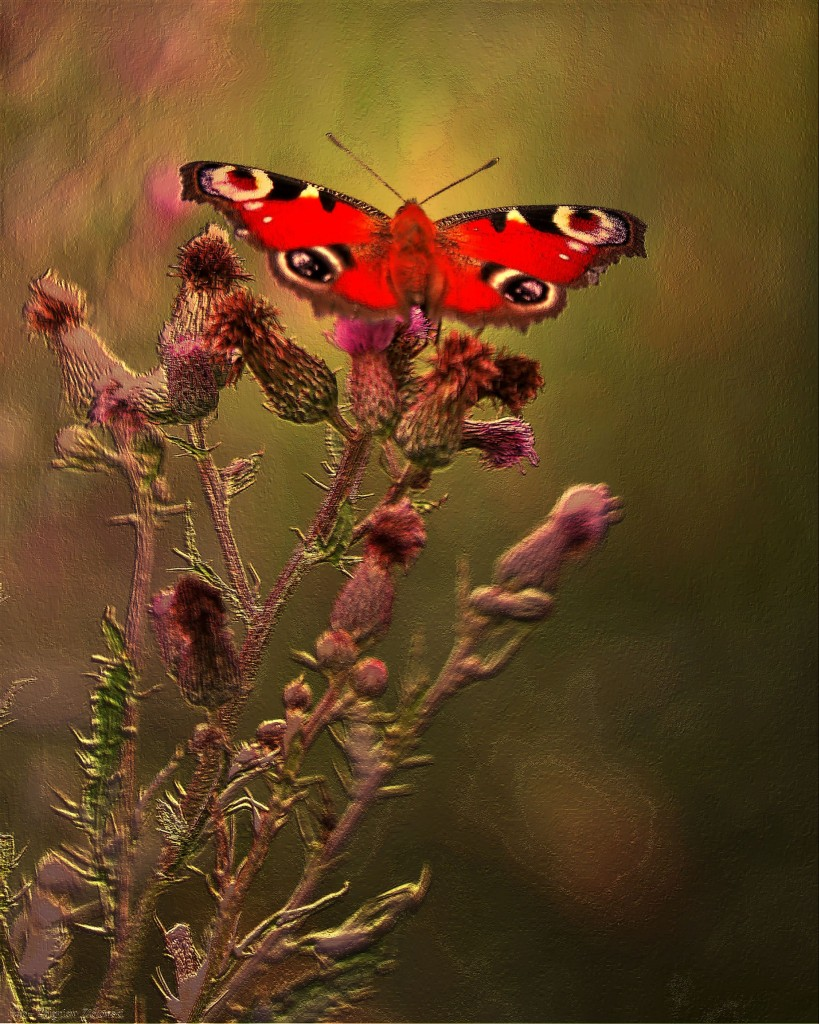 Zdjęcia: Nadnoteckie łęgi, Dolina Noteci, Kwiaty  wabiące motyle, POLSKA