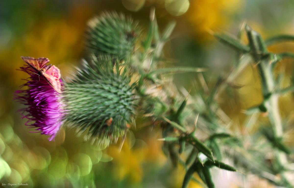 Zdjęcia: Nadnoteckie łęgi, Dolina Noteci, Obcowanie ze światem przyrody-, POLSKA