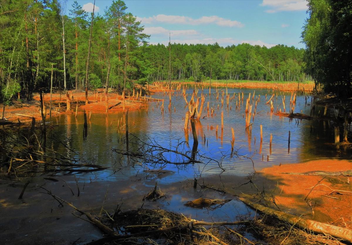 Zdjęcia: Park Krajobrazowy Łuk Mużakowa, Lubuskie, dawna kopalnia Babina...., POLSKA