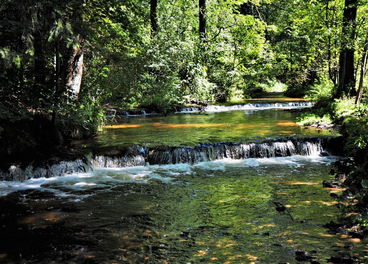Zdjęcia: Susiec, nad rzeką Tanwią, Roztocze, szumy..., POLSKA