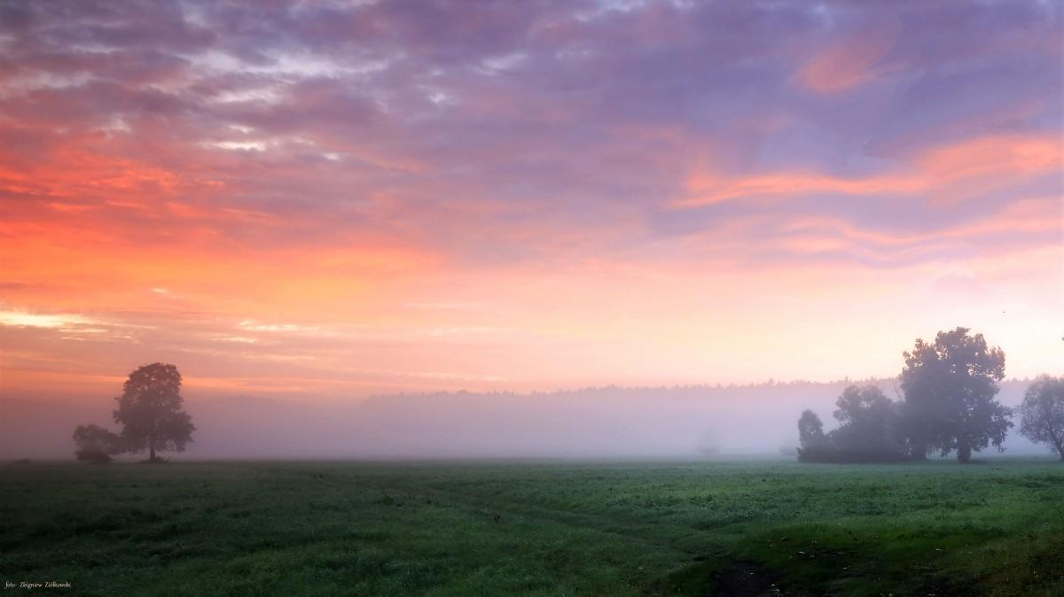Zdjęcia: Nadnoteckie łęgi, Dolina Noteci, Złota godzina w Dolinie Noteci, POLSKA