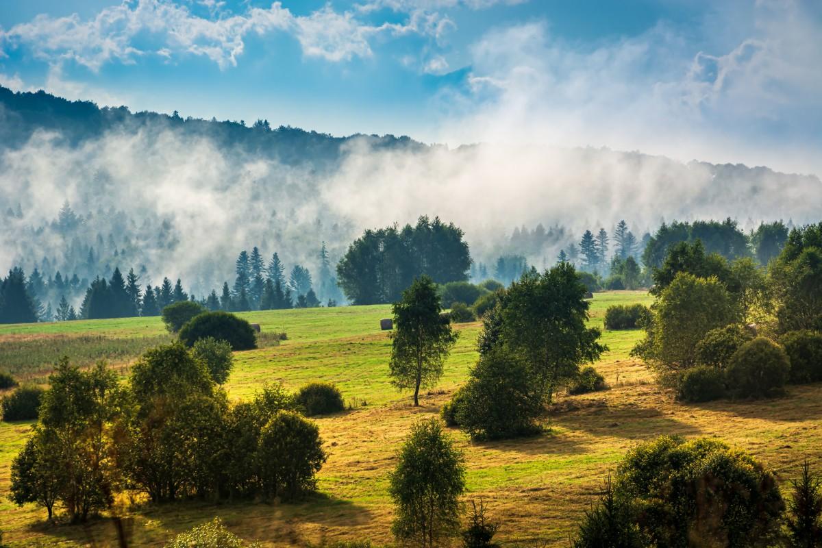 Zdjęcia: Tarnawa Niżna, Bieszczady, Na skraju po deszczu, POLSKA