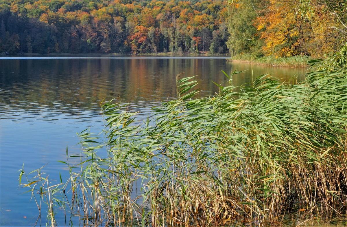 Zdjęcia: Jezioro Trześniowskie - Łagów Lubuski, Lubuskie, jesień nie musi być smutna..., POLSKA