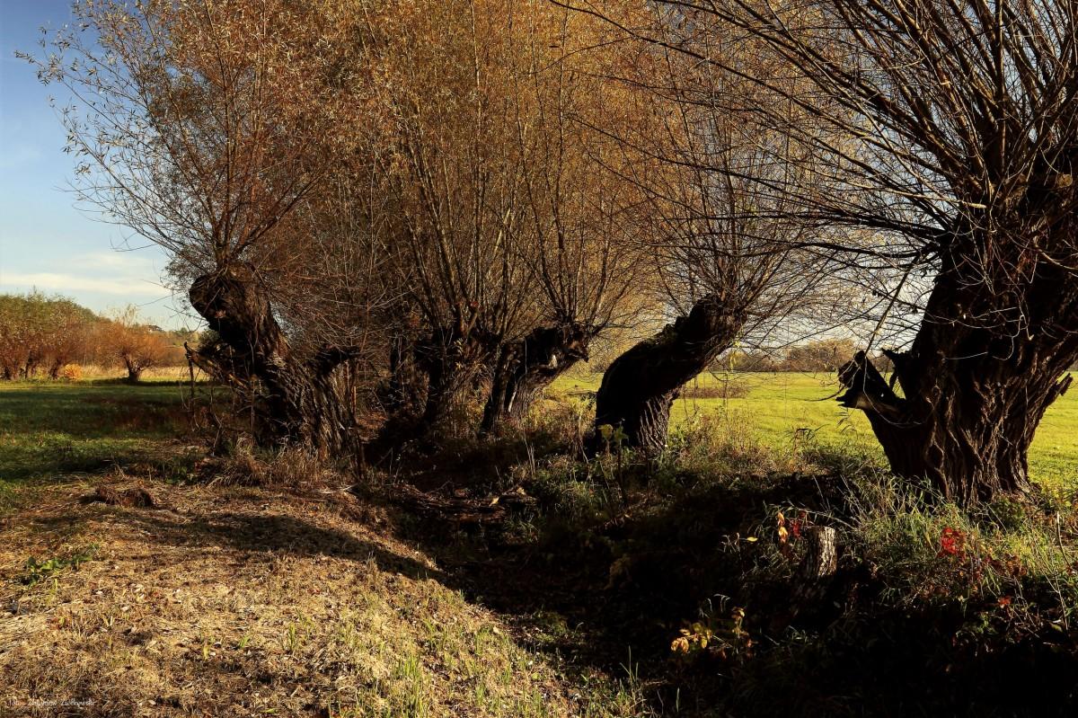 Zdjęcia: Strzelce Dolne, Dolina Wisły, Jesienne impresje, POLSKA