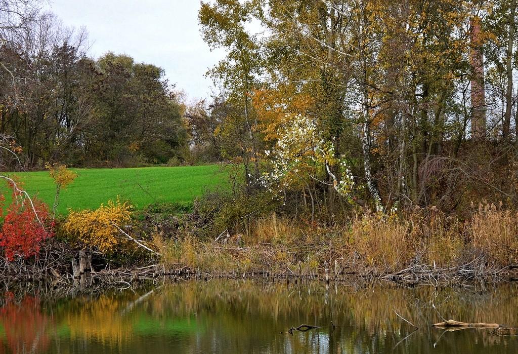 Zdjęcia: Nad Odrą, opolskie, Kolory jesieni, POLSKA