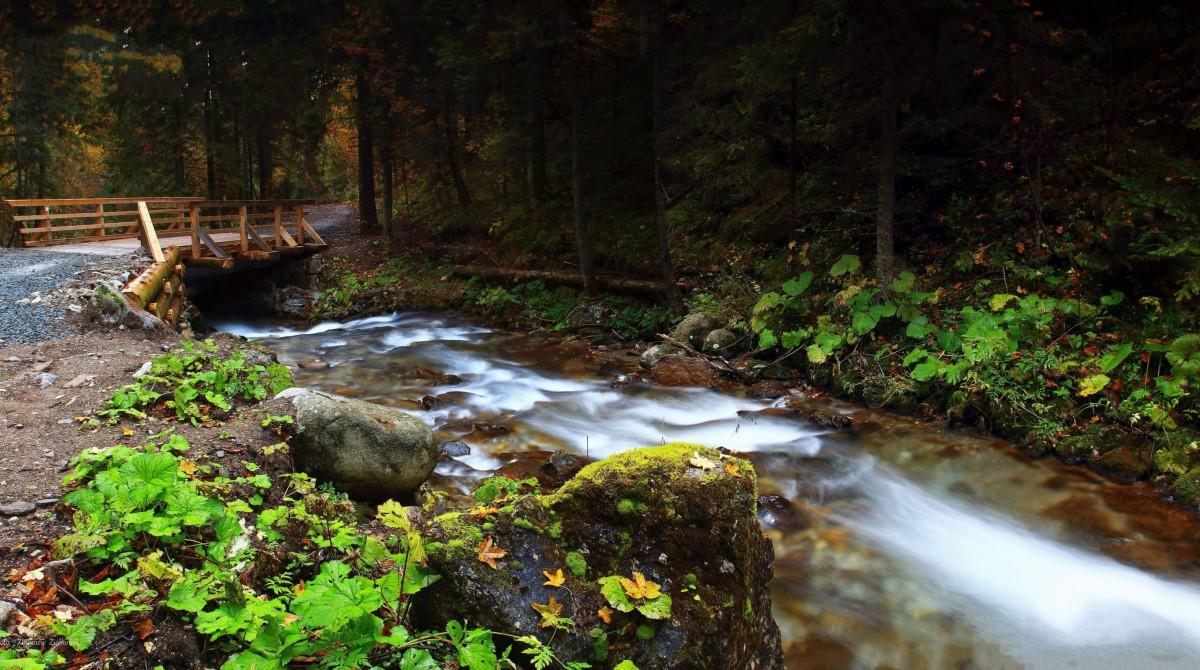 Zdjęcia: Tatrzański Park Narodowy, Zakopane, Tatrzański Park Narodowy, POLSKA