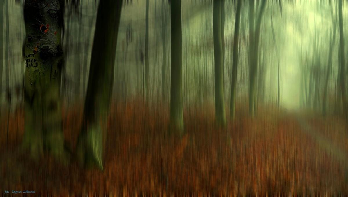 Zdjęcia: Dolina Brdy, Bory Tucholskie, Piękna jesień tej zimy..., POLSKA