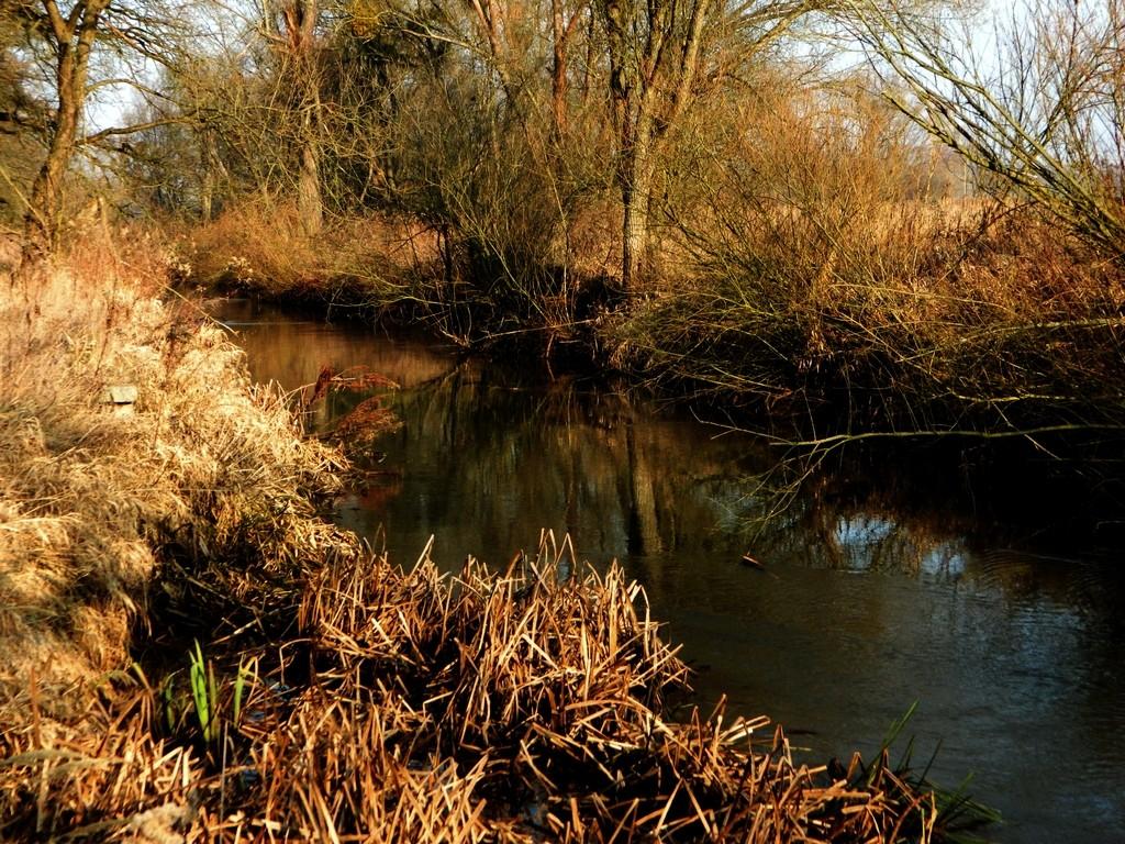 Zdjęcia: Karłowice, opolskie, Rzeka Stobrawa zimą, POLSKA