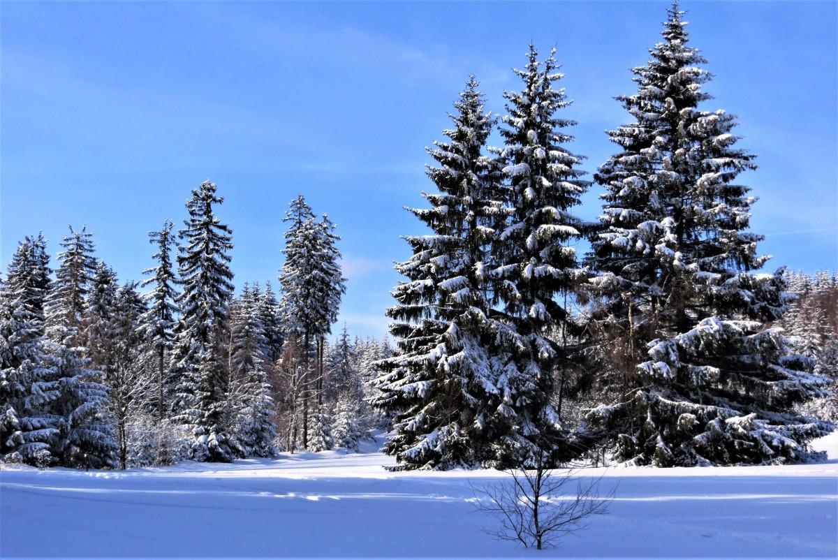 Zdjęcia: Rudawski Park Krajobrazowy, Dolny Śląsk, w białych sukienkach..., POLSKA
