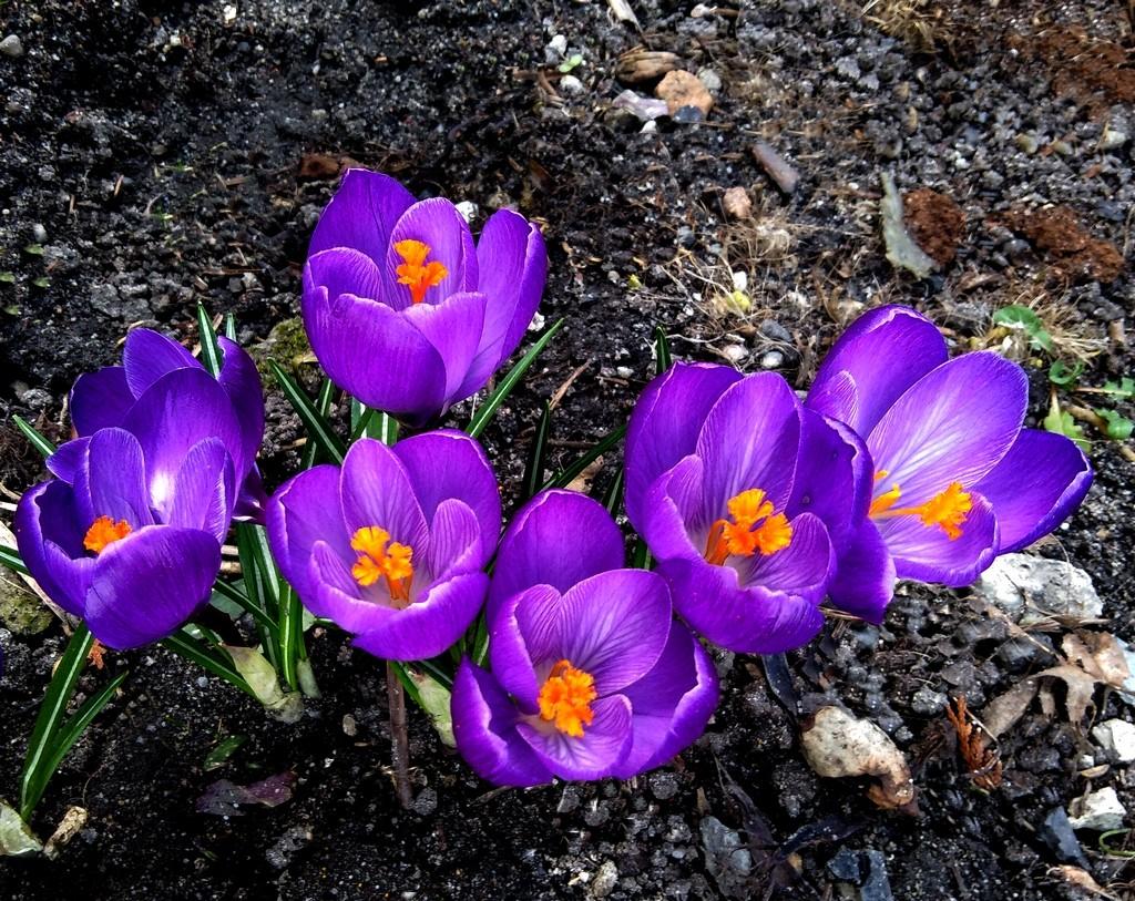 Zdjęcia: Grodziec, opolskie, Wiosennie., POLSKA