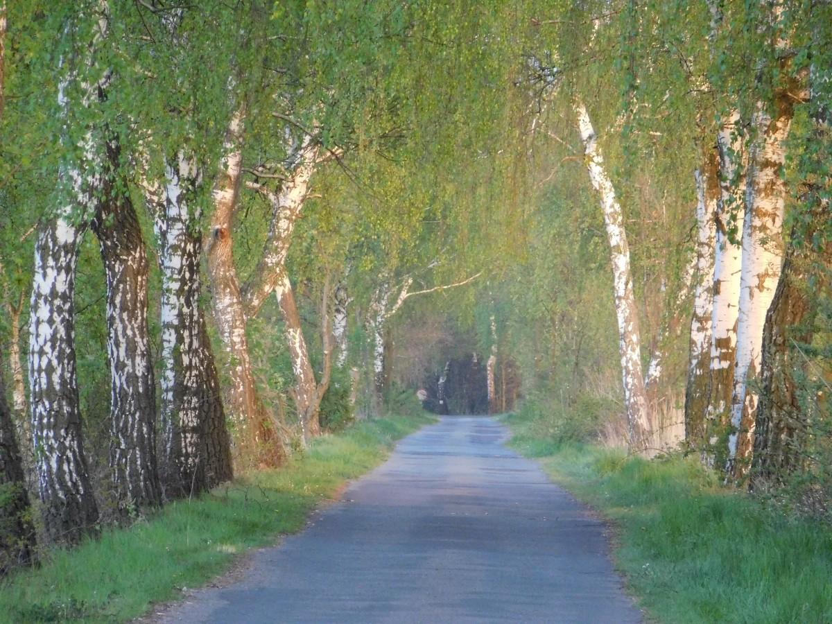 Zdjęcia: dolina karpia, małopolska, droga do..., POLSKA