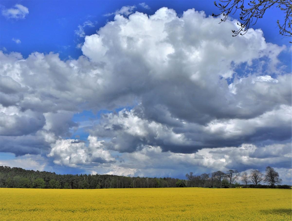 Zdjęcia: Prusim, Wielkopolska, a słońce wysoko, wysoko..., POLSKA