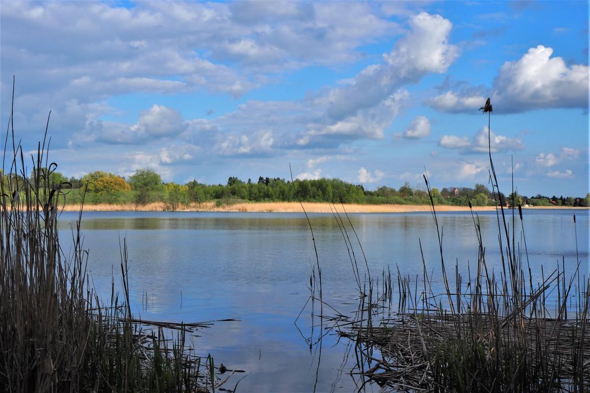 Zdjęcia: Jezioro Binowskie (Puszcza Bukowa), Zachodniopomorskie, brzegiem jeziora..., POLSKA