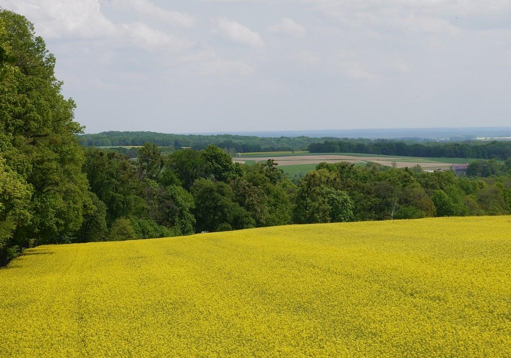 Zdjęcia: Góra św. Anny, opolskie, Żółto zielono, POLSKA
