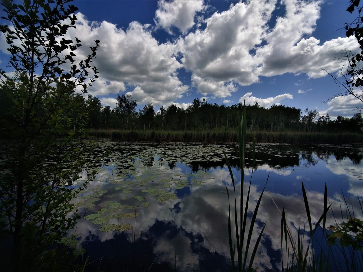 Zdjęcia: dolina karpia, małopolska, Starorzecze Wisły...., POLSKA